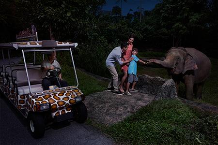 09Singapore Night Safari02